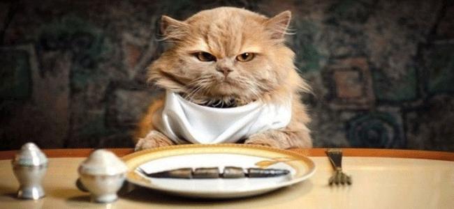 13regole-dinner